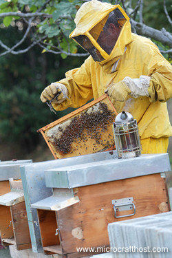beekeeper tending hives